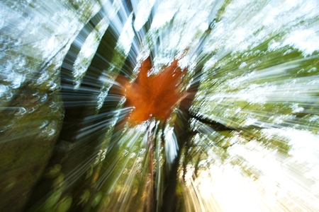 freely: leaf photographed at a time when freely gliding down to earth