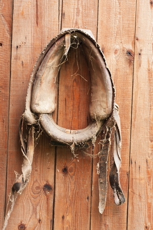 headcollar: old horse harness on the wooden door to the barn