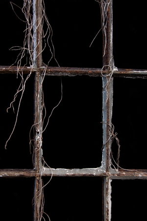 lattice window: lattice window, old, wrapped the remains of withered plants Stock Photo