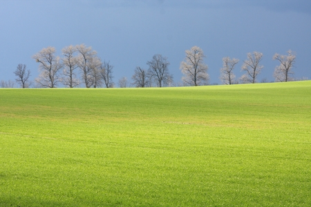 Bright green fresh grass rising up toward the trees and blue sky Stock Photo