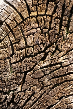 beheaded: cracked from the action of water and sun long beheaded trunk of an old tree Stock Photo