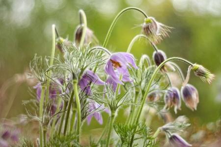 Velvety mossy violet with orange ferns flowers of rosemary Stock Photo