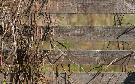 Made of simple, unfurnished fence boards with no leaves yet vegetation