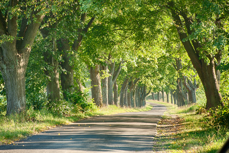 The narrow asphalt road enters picturesquely lit by the strong, summer sun of deciduous trees