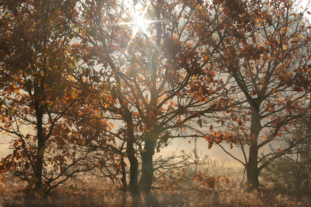 Autumn trees with leafy leaves through which the sun rays pierce