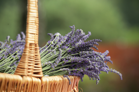 Straw basket with lavender flowers