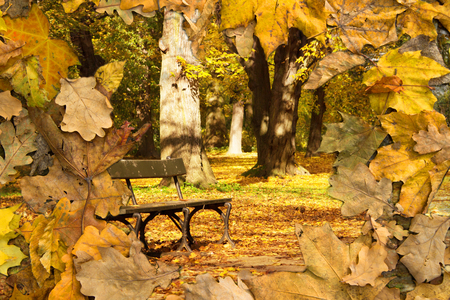 background with view of autumn park with bench and superimposed autumn leaves 写真素材