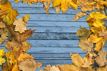 Background with old blue boards and superimposed autumn leaves 写真素材