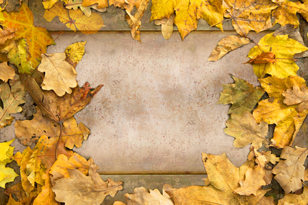 background from a stone plate and superimposed autumn leaves 写真素材