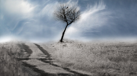 lonely tree with a black bird sitting on it, growing by a dirt road, among fields covered with snow and a blue sky with clouds Stock Photo