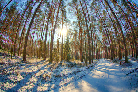 A winter landscape photographed with a very wide lens with sunrays