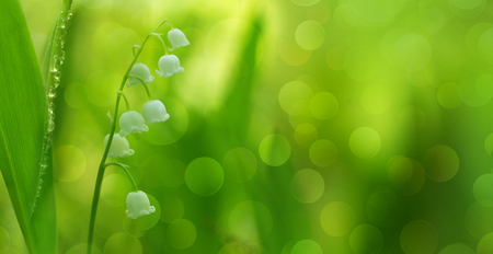 Lily of the valley (Convallaria majalis) among green grasses with blurr