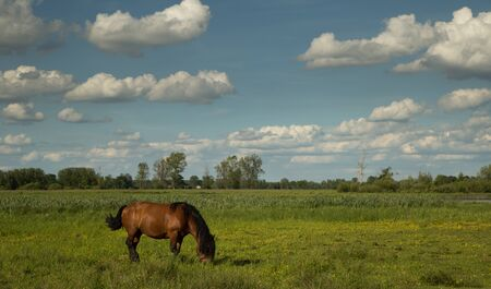 Countryside view - a chestnut horse grazing on the green paddock and white clouds on the blue sky above Standard-Bild