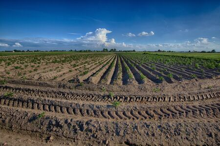 Freshly plowed field with blue sky and clear traces of an agricultural tractor 写真素材