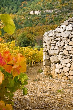 sheepfold: Sheepfold in the grapevines