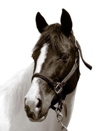 Horse Reklamní fotografie