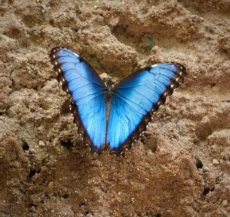 butterflies nectar: Butterfly in captivity Stock Photo