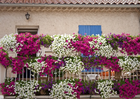 House with flower in provence, France Banco de Imagens - 10273853
