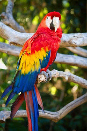 parrot tail: Parrot in captivity at a zoo