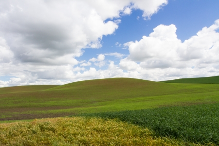 Field with cloudy sky in the Palouse, WA state  Banco de Imagens