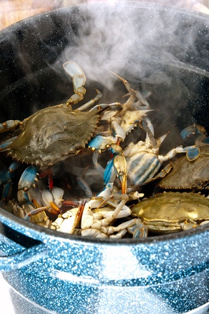 A steaming pot full of blue crabs. photo