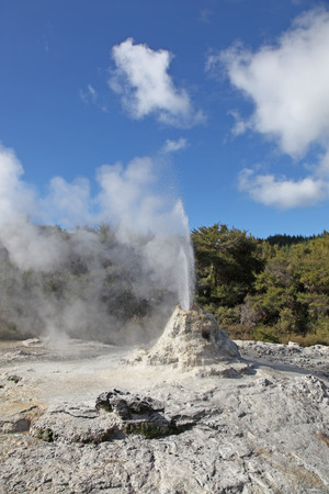 erupt: Lady Knox Geyser in Rotorua New Zealand. This geyser is a popular attraction in the Rotorua thermal region in New Zealand