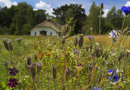 desolated: Beautiful colored flowers before a idyllic farmhouse