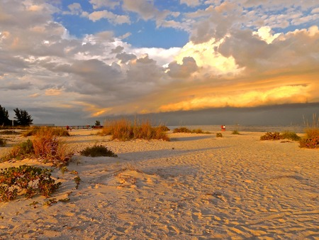 sea oats: Gasperilla Island FL