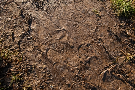 footsteps and traces in wet brown mud photo