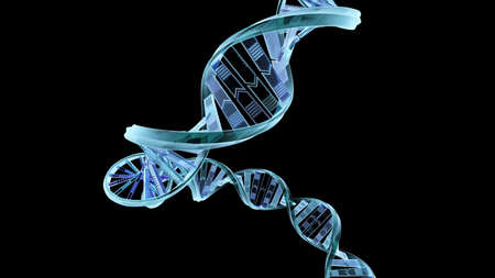 A computer generated strand of DNA on a black background. Stock Photo - 4763805