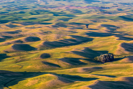 The rolling hills and fields of the Palouse region in Washington state.