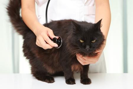 veterinarian examines a cat photo