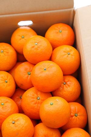 orange fruit citrus tankan in a carton box against white background