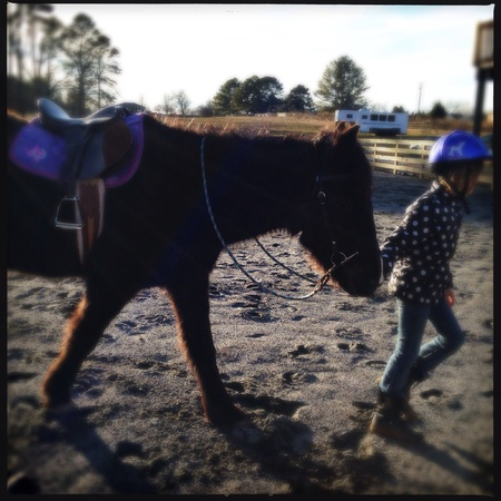 Horse farm in north Georgia, USA