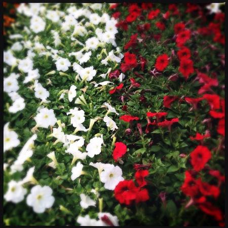 Colorful flowers close up Banco de Imagens