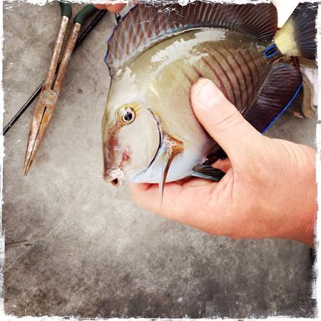 Fishing Banco de Imagens - 27399026