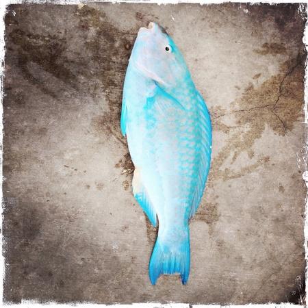 Fish Banco de Imagens - 27399054