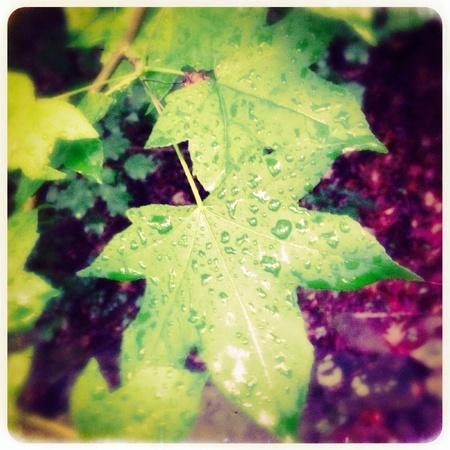 Close-up van regendruppels op de bladeren Stockfoto