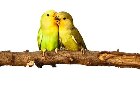 amigos abrazandose: Pájaros del amor en el fondo aislado