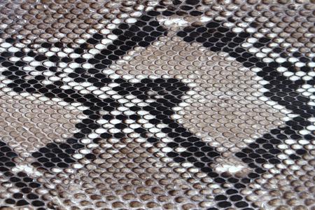 snake skin: texture leather Snake skin