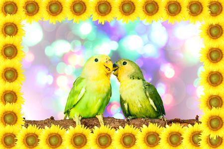 Lovebird on sunflower frame