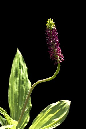 The Species Orchid of Thailand Stock Photo - 8279872