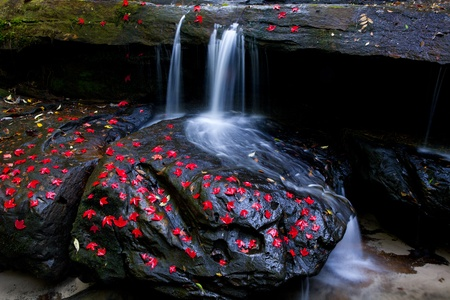 Beautiful maple leaves of Phu Kradueng on waterfall Stock Photo