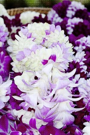 festoon: White garland festoon for worship buddha in Thailand