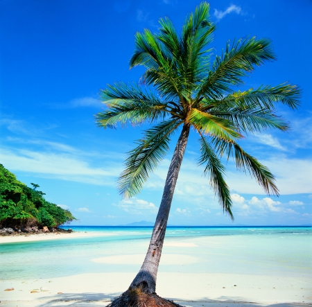 Tropical beach with coconut palm trees  photo