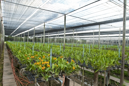 Large orchid greenhouses Small orchid breeding