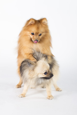 tunable: Dog breeds