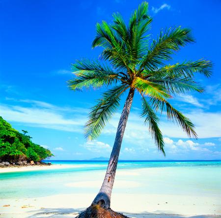 tunable: White sand beach with crystal clear sea, Maya island, Krabi, Thailand Editorial