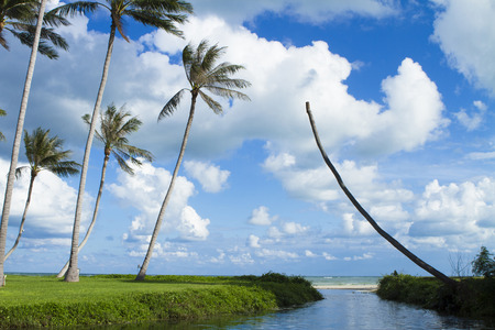 'koh samui': Tropical beach of Koh Samui island in Thailand