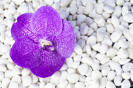 Beautiful orchids Placed stones on white